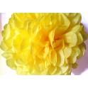Pompon limun žuti